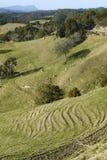 新西兰:与侵蚀- v的农田风景 免版税库存图片