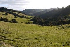 新西兰:与坚固性小山的农田风景- h 免版税库存照片