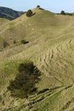 新西兰:与小山的农田风景- v 库存图片