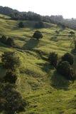 新西兰:与树的农田风景- v 免版税库存照片