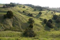 新西兰:农田风景- h 免版税库存图片