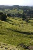 新西兰:农田风景- v 免版税图库摄影