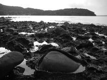 新西兰:奥克兰港口海滩Huia 免版税库存图片