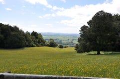 新西兰hilside 免版税库存图片