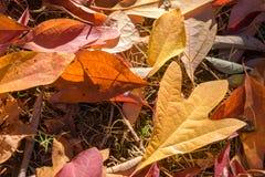 新近地下落的叶子 库存照片