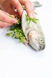 新近地充塞一条cought鳟鱼的女性厨师的手 免版税库存照片