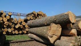 新近地切好的树日志 股票视频