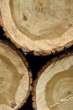 新近地切好的树采伐特写镜头 免版税图库摄影