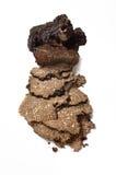 新近地切的块菌 免版税图库摄影