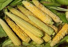新近地剥壳的玉米 免版税图库摄影