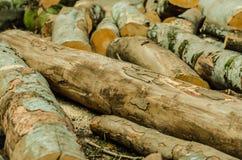新近地剪切日志被堆的结构树 免版税图库摄影