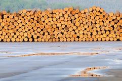新近地剪切被堆的结构树日志  免版税库存图片