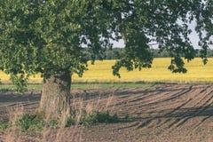 新近地培养的农业领域准备好生长- vintag 免版税库存照片