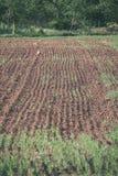 新近地培养的农业领域准备好生长- vintag 图库摄影