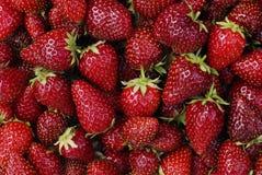 新近地摘的草莓 库存图片