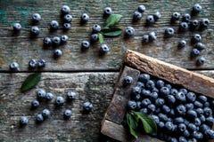 新近地摘的蓝莓在一个木箱 库存照片
