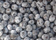 新近地摘的蓝莓 图库摄影