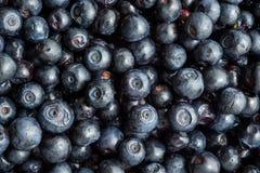 新近地摘的蓝莓 免版税库存图片