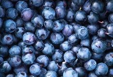 新近地摘的蓝莓 库存图片