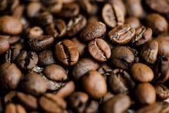 新近地烤咖啡特写镜头射击  免版税库存照片