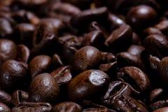 新近地烤咖啡豆在狭窄的焦点 免版税库存图片