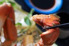 新近地煮熟的螃蟹 库存图片