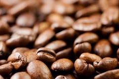 新近地研了咖啡豆烤用咖啡植物的果子,有很多五谷 免版税库存照片