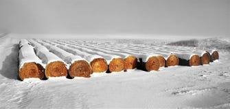 新近地积雪的圆的秸杆大包行  免版税库存图片