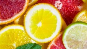 新近地被切的桔子、葡萄柚、石灰和柠檬美好的特写镜头背景  免版税库存图片