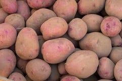 新近地被开掘的坏的红色土豆 库存图片