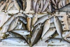 新近地被捉住的沼泽或Boops boops, gopa在柜台的箱子钓鱼在希腊鱼市上 免版税库存照片