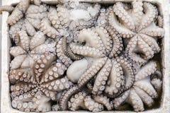 新近地被捉住的章鱼寻常在有冰的一个箱子在希腊鱼购物 库存照片