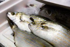 新近地被捉住的萨帕樽海鞘或Salema钉头鱼详细的特写镜头在白色盘子有冰的待售在希腊鱼市上 库存图片