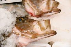 新近地被捉住的鲂、圣皮埃尔或者彼得` s特写镜头与开放嘴的鱼宙斯法伯在冰在希腊鱼3月的待售 库存图片
