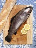 新近地被捉住的鳟鱼渔 免版税库存图片