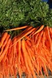 新近地被收获的红萝卜 免版税库存照片