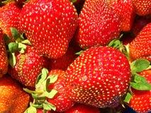 从新近地被收获的草莓的背景 库存图片