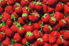新近地被收获的草莓 免版税图库摄影