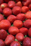新近地被收获的草莓 免版税库存图片