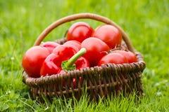 新近地被收获的蕃茄和胡椒 库存图片