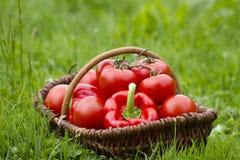 新近地被收获的蕃茄和胡椒 图库摄影