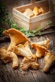 新近地被收获的蘑菇在森林里 库存图片