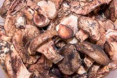 新近地被收获的蘑菇2 库存图片