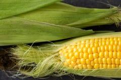 新近地被收获的黄色甜玉米关闭  免版税图库摄影