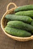 新近地被收获的黄瓜 免版税库存图片