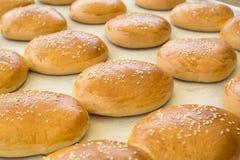 新近地被烘烤的汉堡包全麦面包 免版税图库摄影