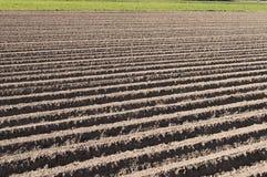 新近地被犁的农业域 图库摄影
