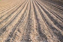 新近地被种植的土豆 库存图片