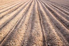 新近地被种植的土豆 库存照片