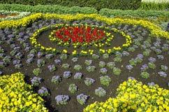新近地被种植的装饰花圃 免版税图库摄影